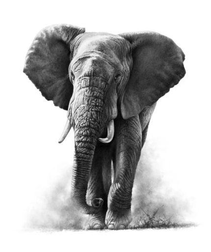 1c12d0f3081eeb8722ceea5337ebd531--tattoo-elephant-elephant-drawings