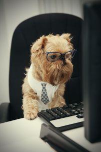 9b1506373a5b5795018d3b02b18ccf08--dressed-up-dogs-dog-activities
